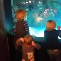 Aquarium with friends!